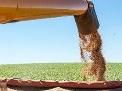 Preços do trigo sobem na Rússia