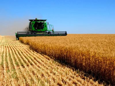 EUA realizam embarques de trigo para o Brasil pela 8ª semana consecutivavoltar