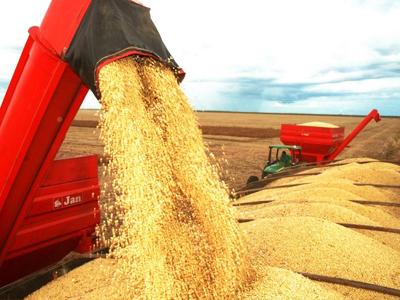 RS: Produtores de trigo estão otimistas com nova safra