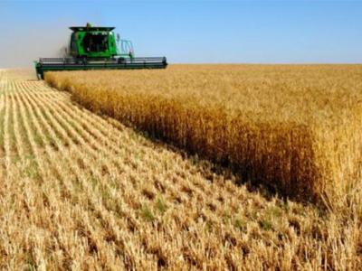 Soja, milho e trigo encerram em queda em Chicago