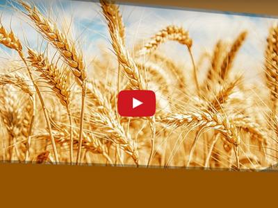 Concorrência com o trigo da Argentina e Paraguai e deságio nos prêmios deixam leilões de Pepro inviáveis
