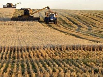 Argentina busca novos mercados para trigo