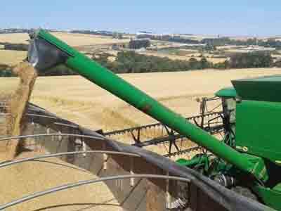 Estado negocia 63,86 mil toneladas de trigo