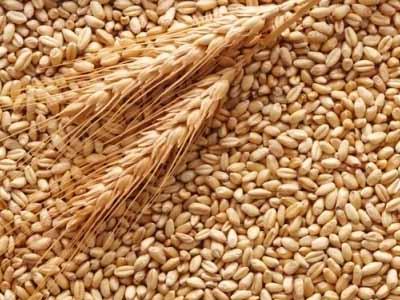 Confronto EUA e Rússia altera equilíbrio no trigo