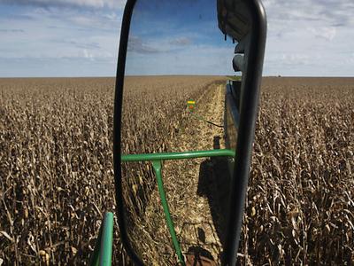 Para apoiar setor de trigo, leilões do governo turbinam exportações