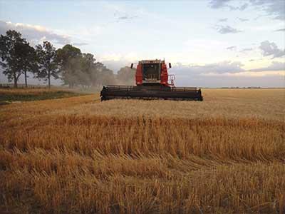 Quanto variou o trigo nacional e importado no mês de julho/16?