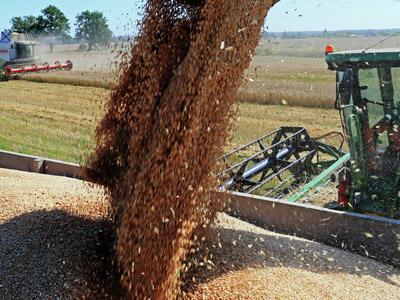 Argentina tem alta de 23% nas exportações de trigo