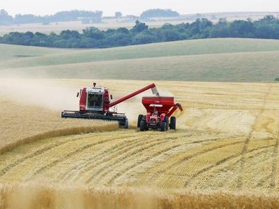 Redução no preço do trigo preocupa produtores do Paraná