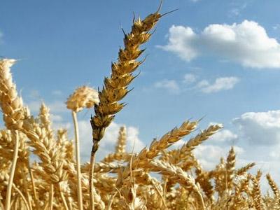 Brasil quer discutir melhora na qualidade do trigo diante de safra recorde argentina