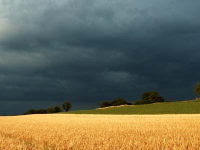 Argentina: chuvas paralisam plantio de trigo em Buenos Aires e La Pampa