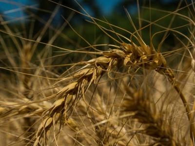 Agronegócio promete crescimento em diversas áreas em 2017