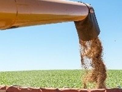 Conab aumenta produção de trigo do Brasil em 9,2%