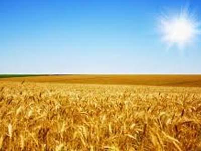 Alta do trigo é repassada às farinhas; preços do açúcar mantêm sustentação