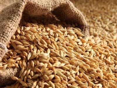 Brasil avalia trigo de fora do Mercosul diante de escassez e crise argentina