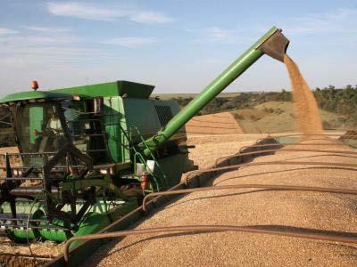 Com quebra na safra de trigo, Brasil pode elevar importação em 2017