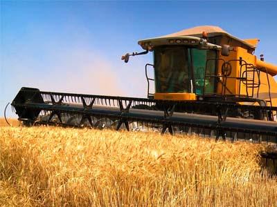 Argentina volta a influenciar preços de trigo no Brasil