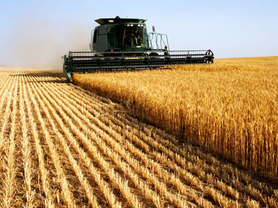Preço do trigo retrocede 10 anos e estimula negócios internacionais