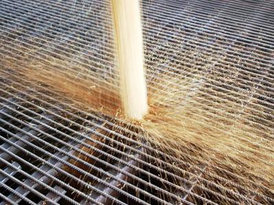 Importação de trigo deve ser facilitada
