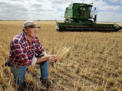 Em meio a uma seca recorde, Austrália tem alta nos preços do trigo