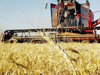 Giro do Trigo na Argentina aproxima produtores locais e indústria moageira brasileira
