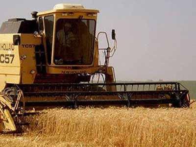 Grupo discute os limites de agroquímicos para o trigo