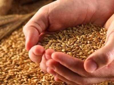 Trigo de qualidade será valorizado no Paraná