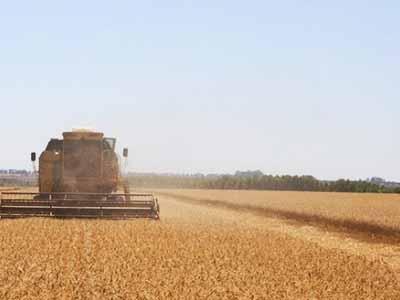Argentina já colheu 58,3% do trigo