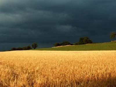 Colheita do trigo começa no Paraná e chuva pode atrapalhar trabalhos, diz Deral
