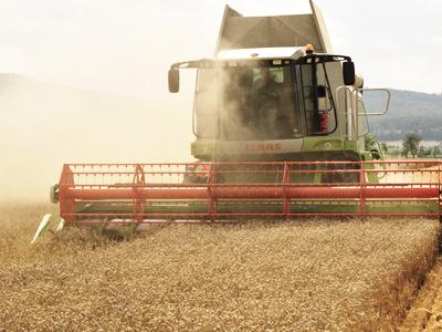 Clima contribui para o desenvolvimento das lavouras de trigo