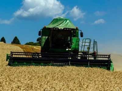 Trigo: Início da colheita e retração de compradores pressionam cotações
