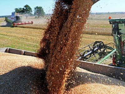 Argentina deve exportar 15% a mais de trigo neste ano