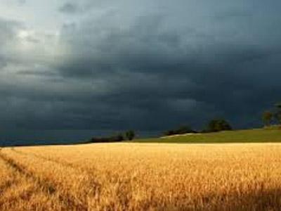 Chuvas no Sul têm efeitos distintos sobre plantio de trigo do PR e RS