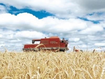 Falta de harmonização das regras no Mercosul preocupa moinhos de trigo