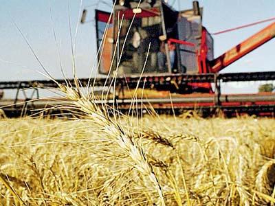 Safra de trigo da Argentina cresceu 62,9% em 2016/17