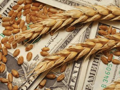 Argentina supera Rússia e EUA com trigo mais barato do mundo