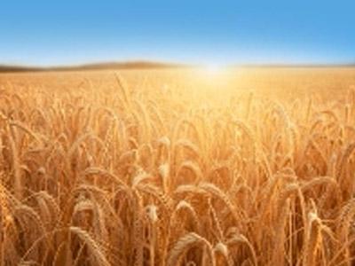 Argentina e Paraguai querem ampliar fornecimento de farinhas de trigo ao Brasil