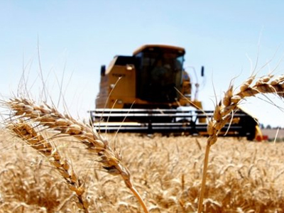 Boas safras brasileira e argentina de trigo devem reduzir preços