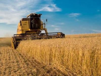 Governo autoriza Conab a realizar leilões de apoio à comercialização do trigo