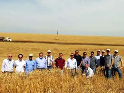 RS: Giro do trigo aproxima produtores e indústria