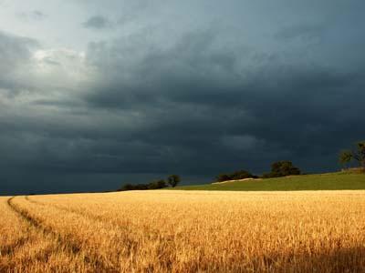 Fim da onda de calor na Europa ajuda produtores de trigo