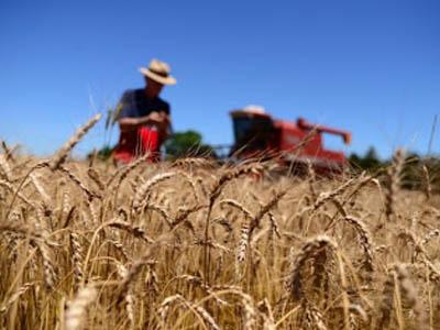 Safra de trigo da Argentina tem três perspectivas diferentes de produção