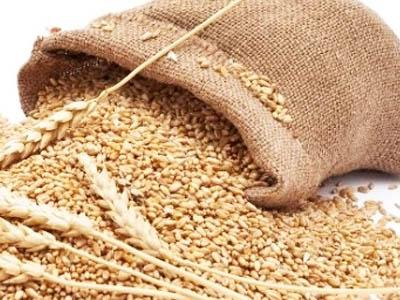 IGC prevê forte safra mundial de trigo em 2017