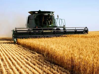 Produtividade do trigo supera expectativa no RS