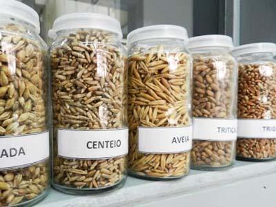 Pesquisa busca maior vida útil aos alimentos integrais
